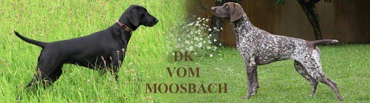 DK vom Moosbach