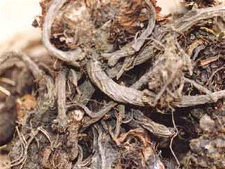 Las causas de la aparición de los granos sobre la persona al recién nacido