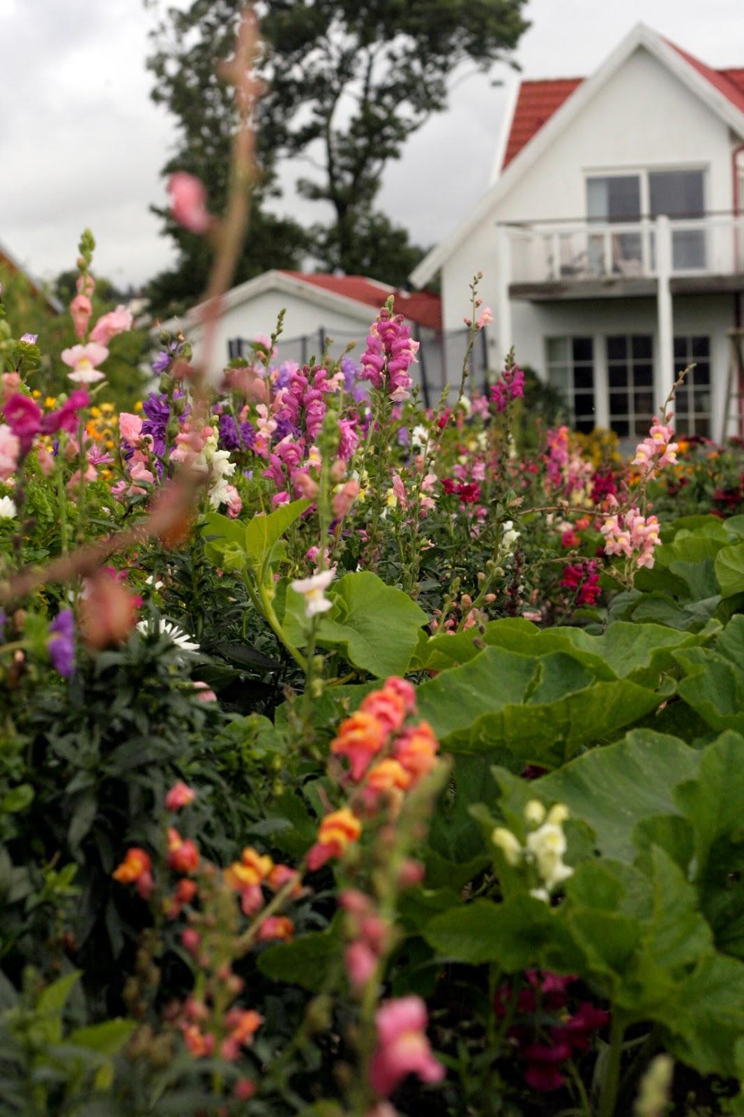 Öarnas trädgårdsplanering: september 2013