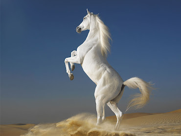 #5 Horse Wallpaper