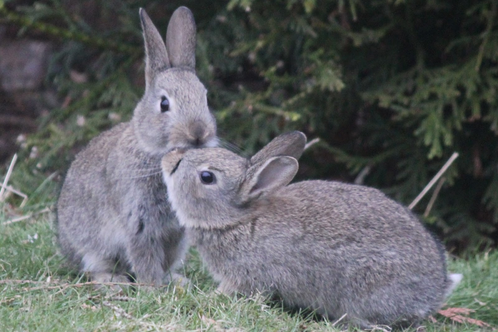 Animals and kids: Wild rabbits