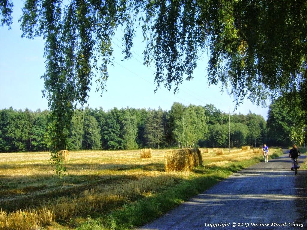 Rydzyna, leśne dukty, łąki i pola uprawne. Fot Dariusz Marek Gierej