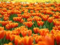 Vivaio Forestale Curno : Vai per vivai dal 5 al 7 aprile in vetrina le eccellenze del