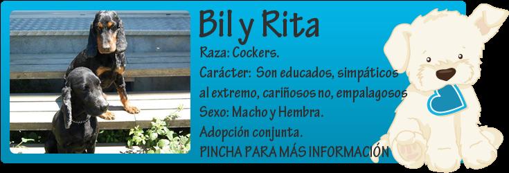 http://mirada-animal-toledo.blogspot.com.es/2014/07/bil-y-rita-perros-la-calle-sobran.html