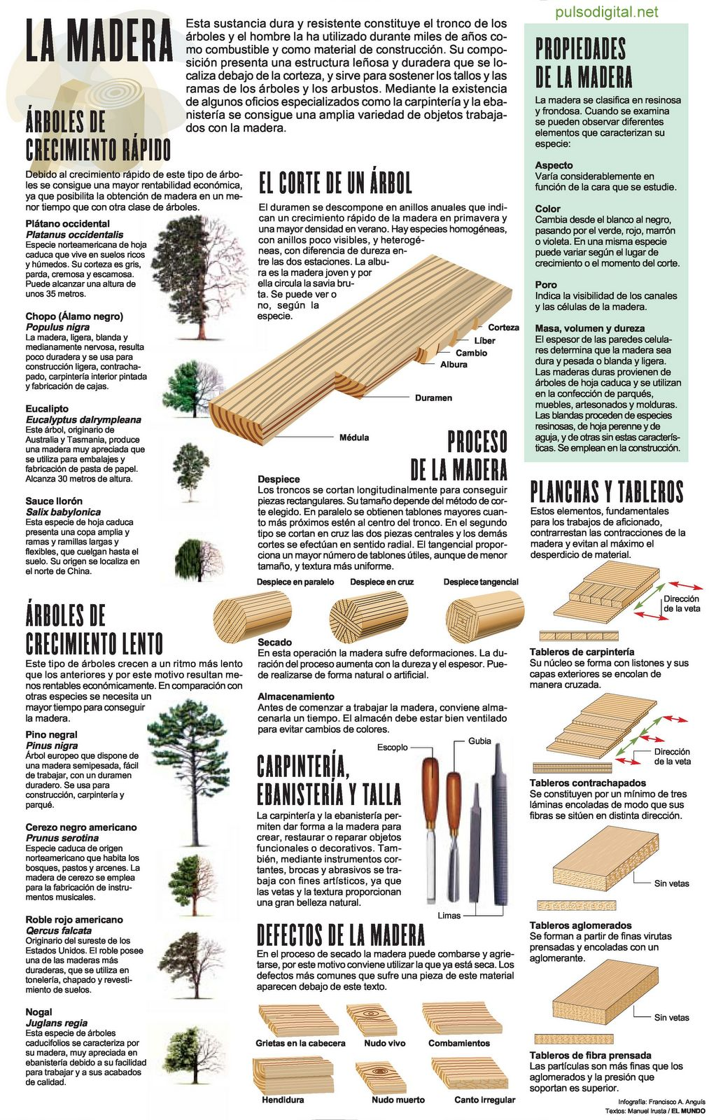 La madera - Lamina escolar