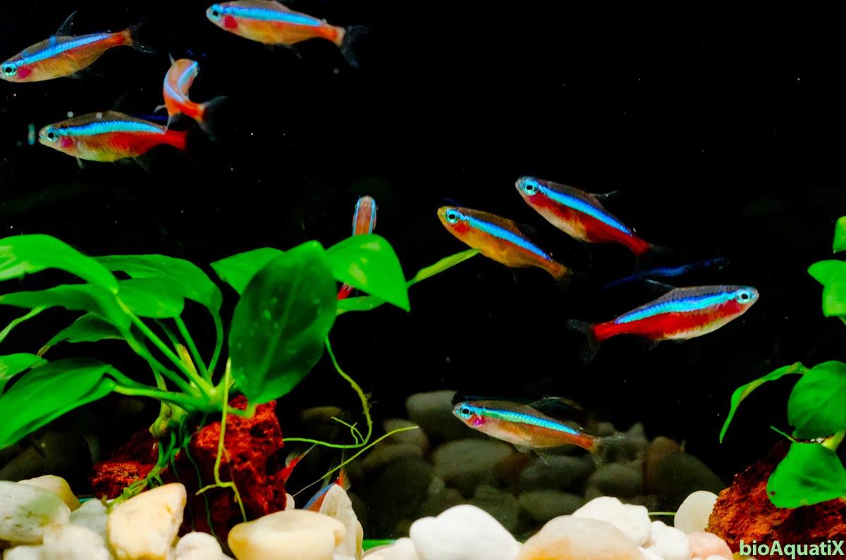 Jenis Ikan Di Aquascape, Jual Khusus Ikan Aquascape, Artikel Jenis Ikan Di  Aquascape,