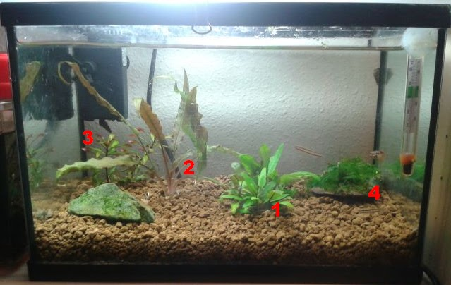 C mo decorar f cilmente un acuario peque o de forma for Acuarios pequenos