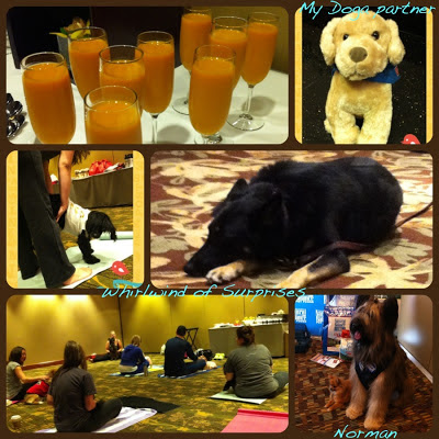 #Barkworld Yoga with your dog, Doga, Norman the Scooter Dog