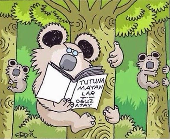 koalalar aşkına