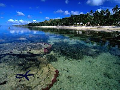 Starfish along the Coral Coast
