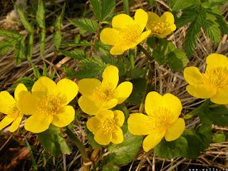 Screensaver_image_yellow_flowers