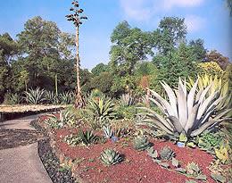 Titan del asfalto se inicia la travesia hacia la reina Jardin botanico de la unam