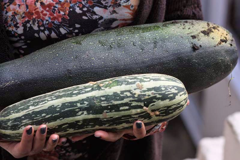 how to cook marrows recipes