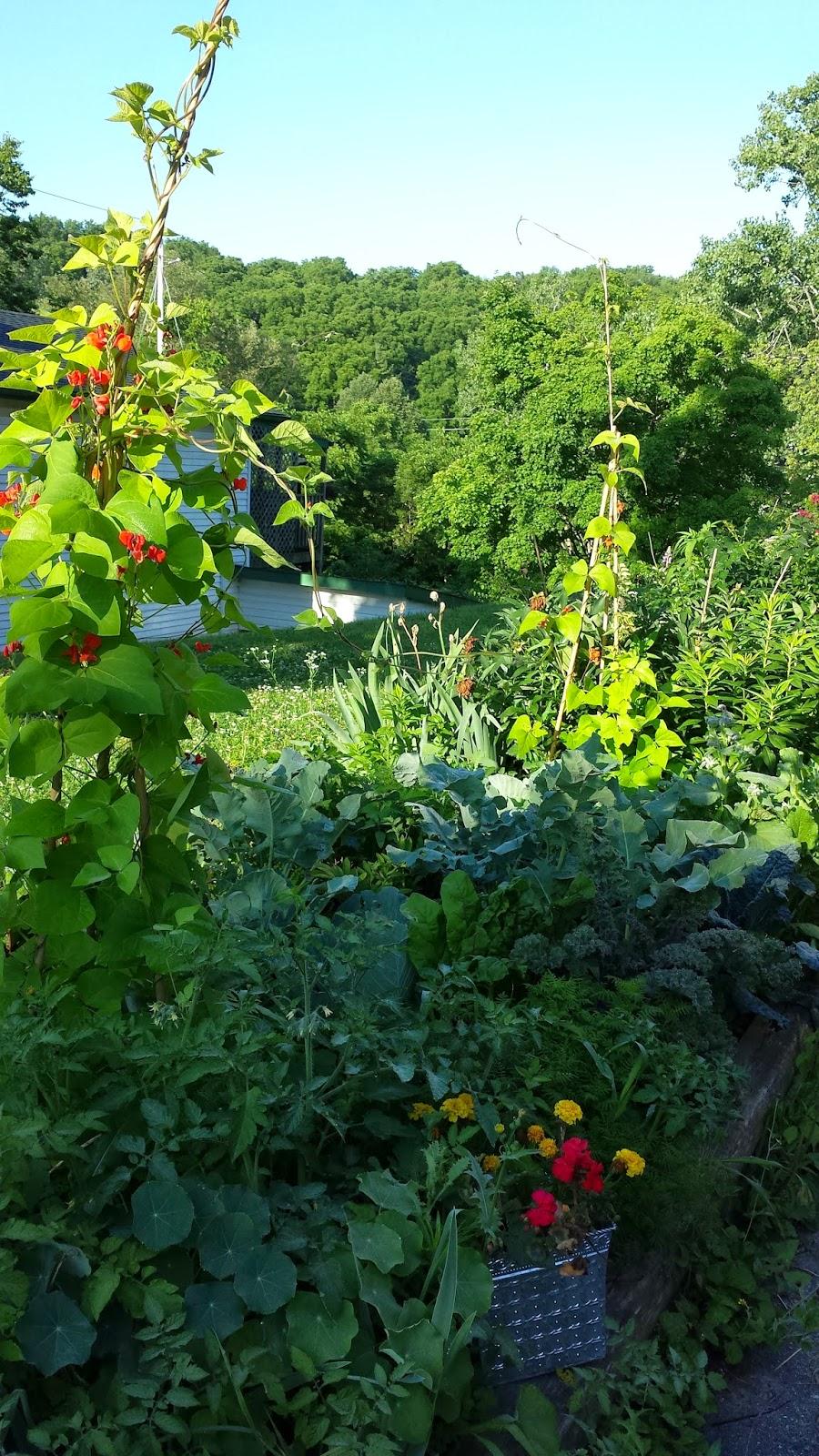 garden July 11 2014