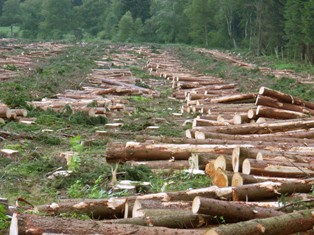 Deforestation Essay-Writing