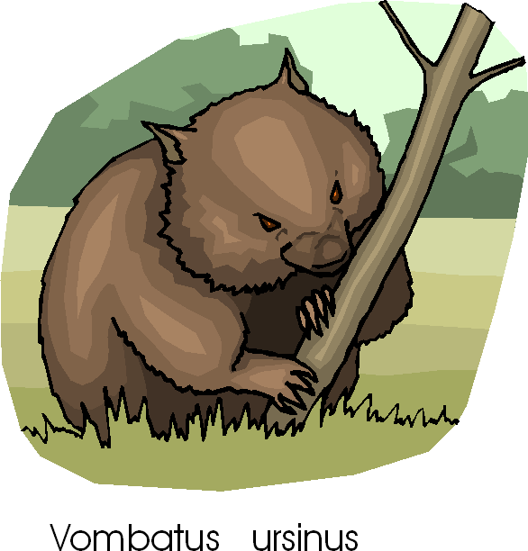 Common Wombat Free Animal Clipart