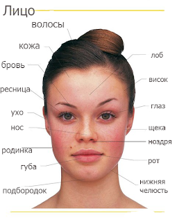 Russian vocabulary: face