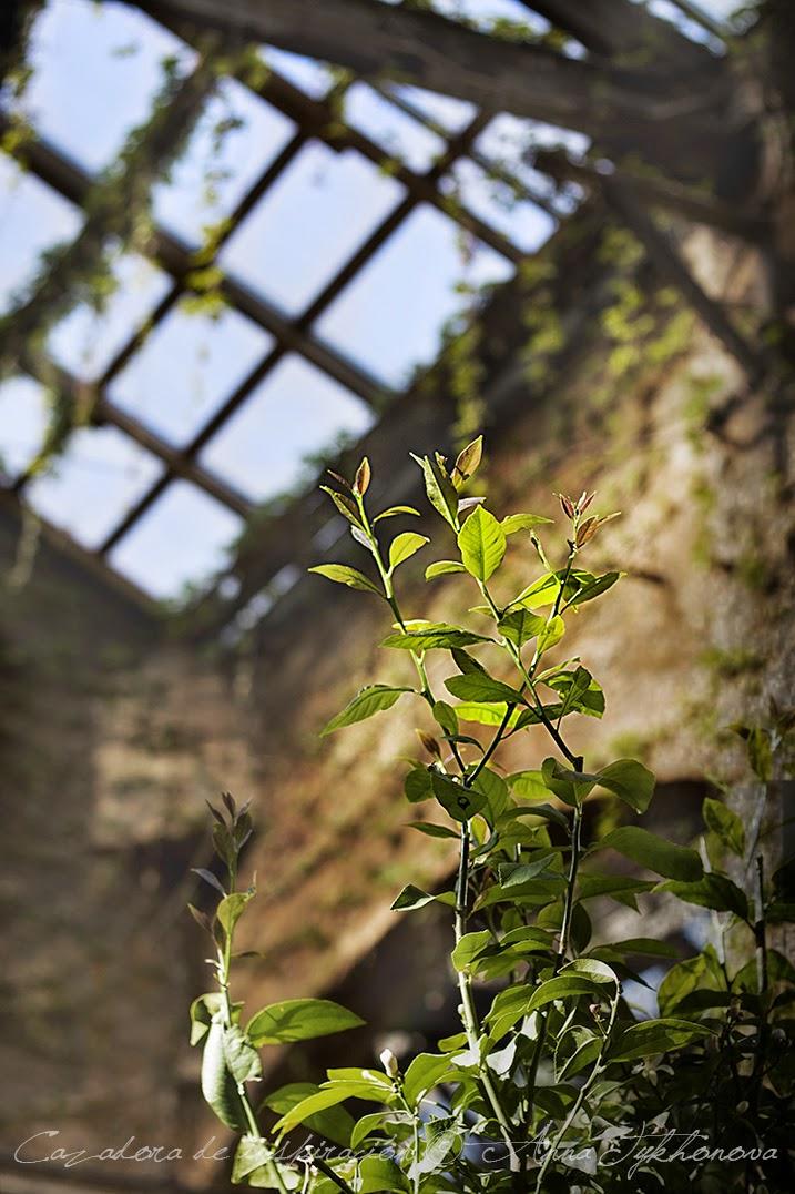 Cazadora de inspiración © Anna Tykhonova / green