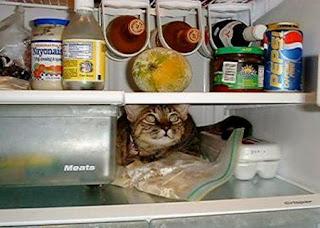 Gato dentro de frigorífico