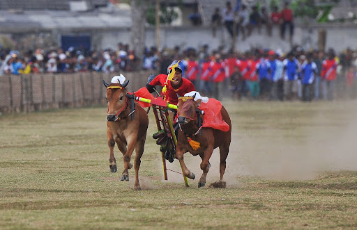 bull racing famous attraction madura island