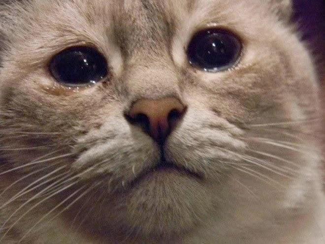 Kucing dalam kurungan