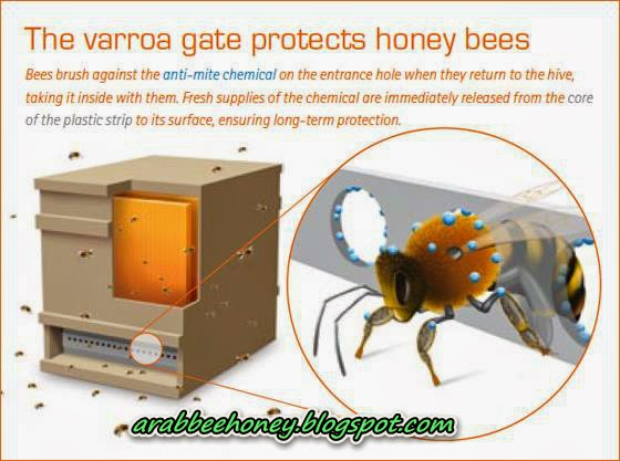The varroa gate protects honey bess