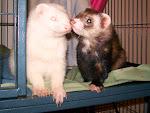 titus and mambo