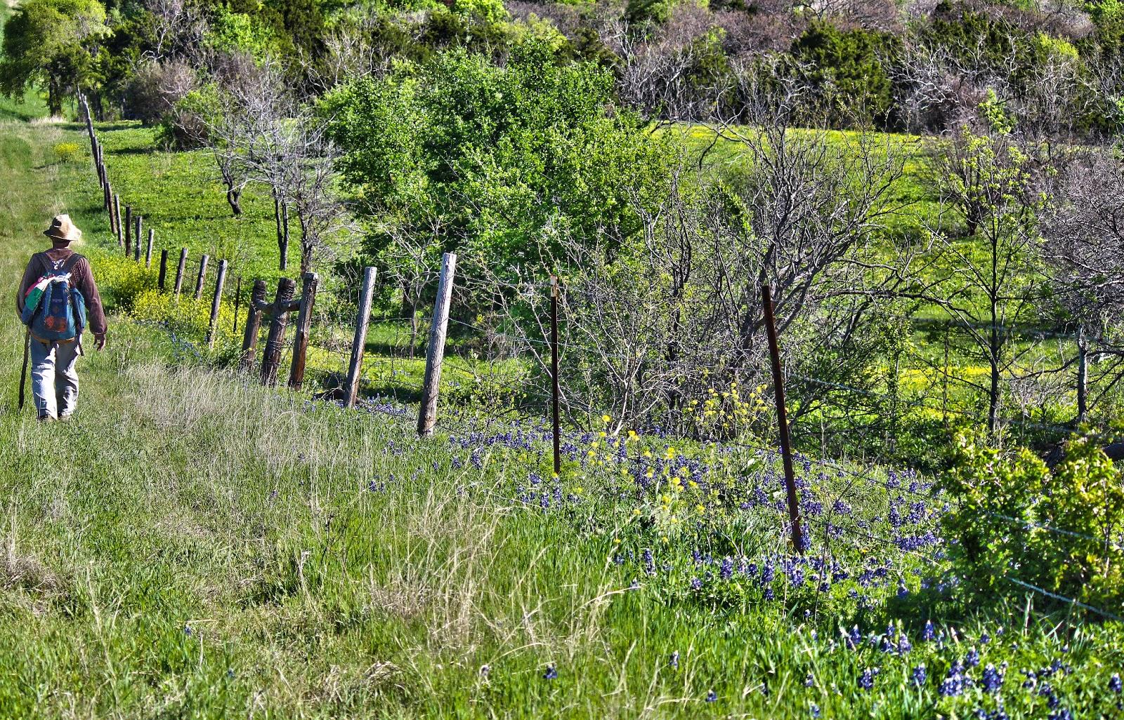 texas+wildflower+hike.jpg