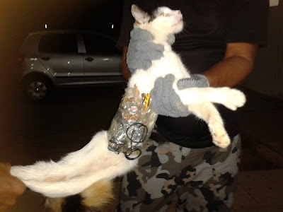 Kucing seludup telefon ke penjara
