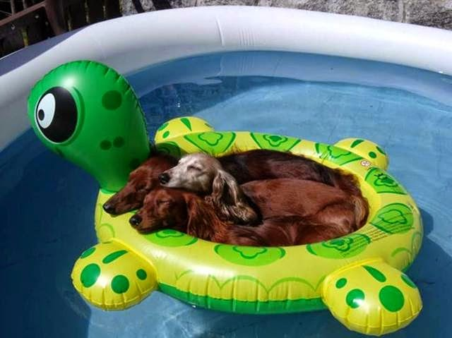 Three puppies sleeping in inflatable pool toy