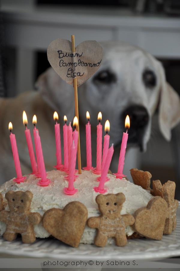 Molto Due bionde in cucina: Torta di compleanno per cani con biscottini GW09