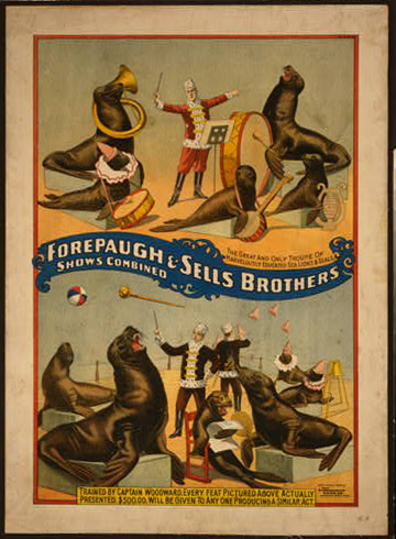 animal poster, circus, classic posters, free download, graphic design, retro prints, vintage, vintage posters, wildlife, Forepaugh & Sells Brothers, Shows Combined - Vintage Circus Poster