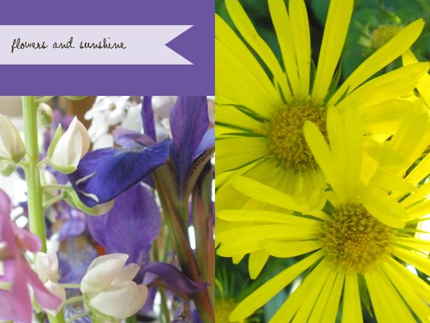 yellow daisy and wild lupine