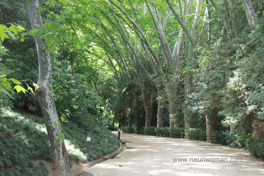 Paseo de los plataneros jard n bot nico de m laga for Jardin botanico de malaga