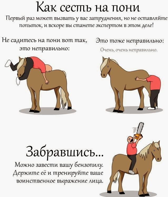 как покататься на пони