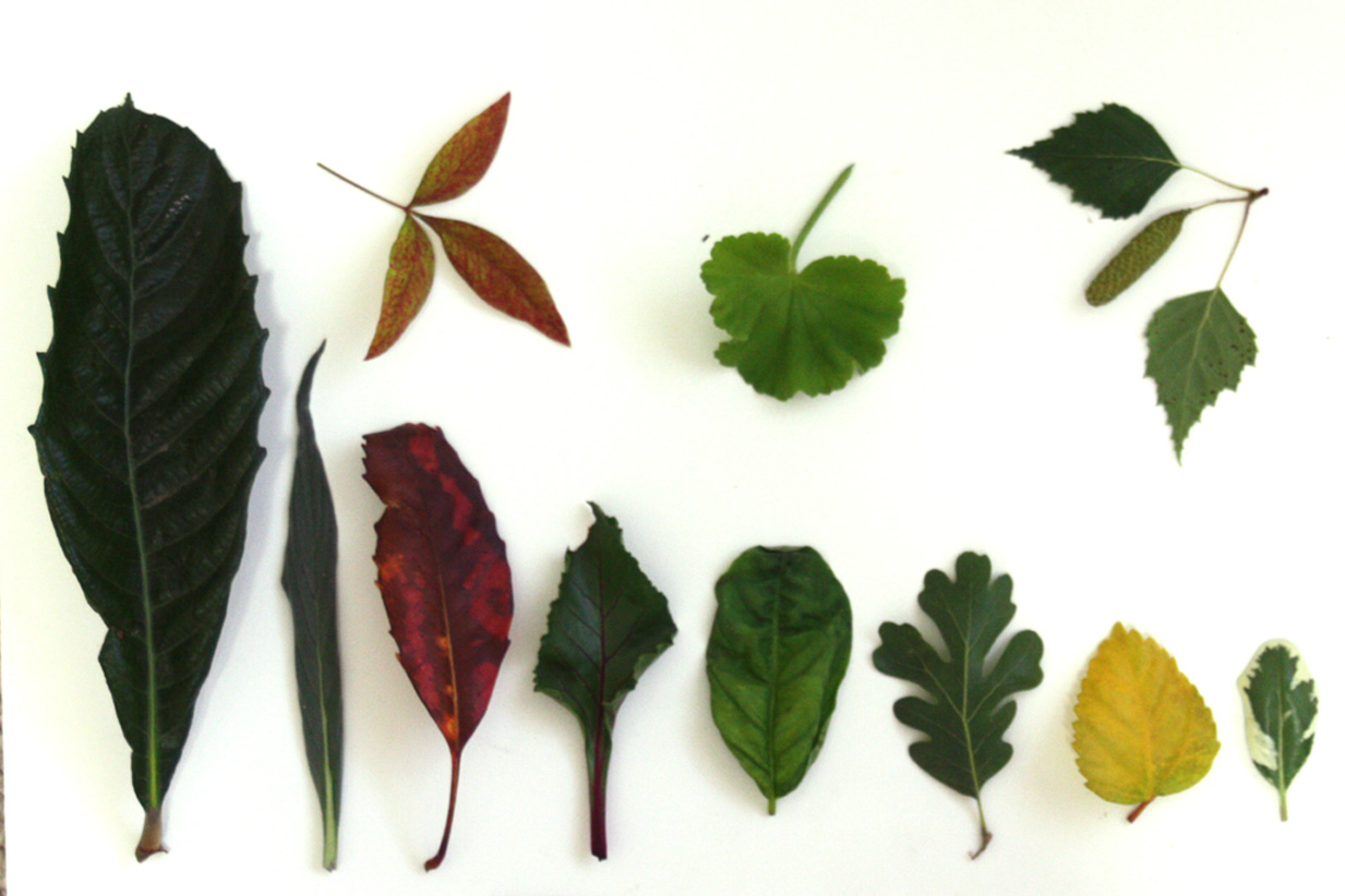Art By Vreeke: SBA Assignment #3 Leaves