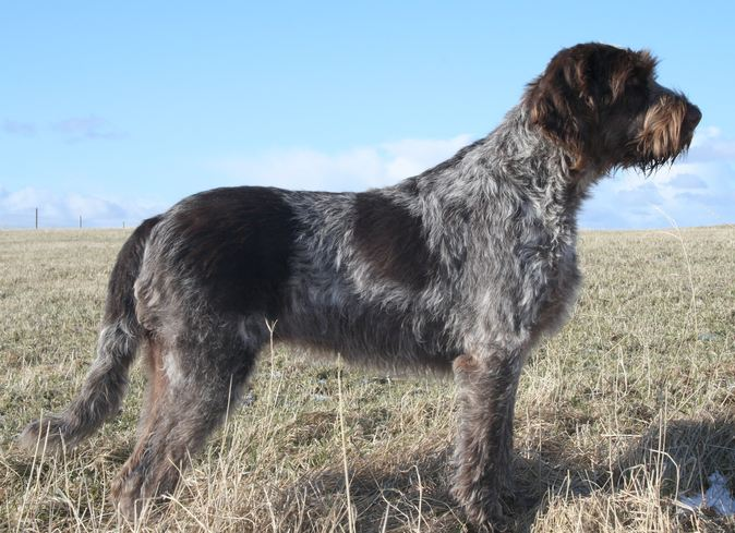 All List Of Different Dogs Breeds Type Of Dogs With