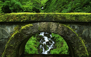 Moss Covered Old Stone Bridge Forest HD Wallpaper