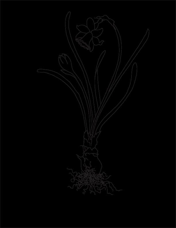 Line Art In Illustrator : Carol morris art february line drawing