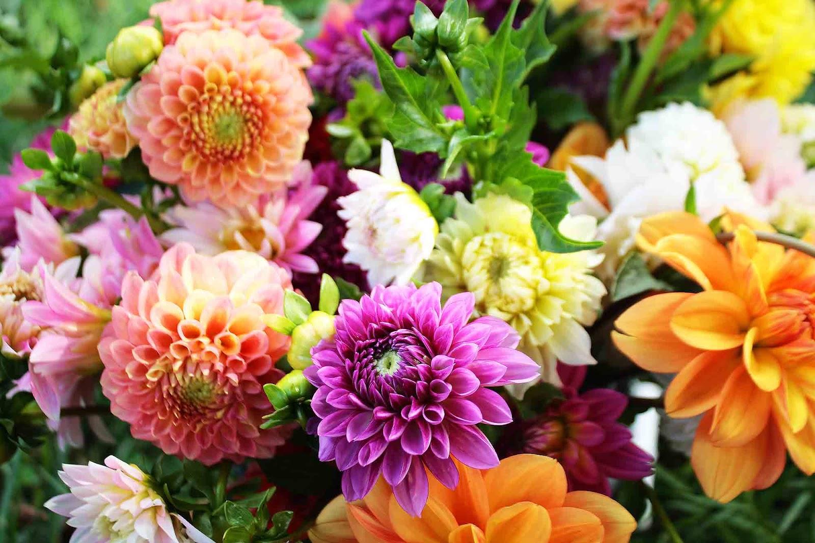 Fresh Flowers Flowers