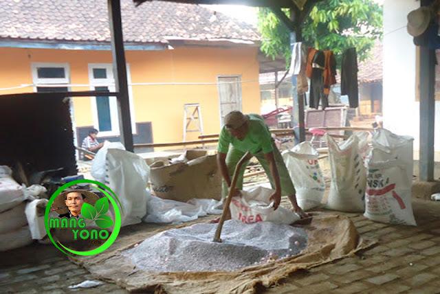 FOTO : Pencampuran pupuk urea untuk pupuk tanaman padi...