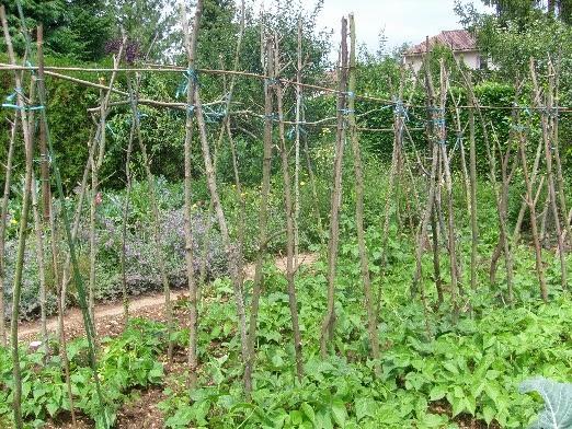 Ma plan te jardin recylage des d chets de taille - Tuteur bambou gros diametre ...