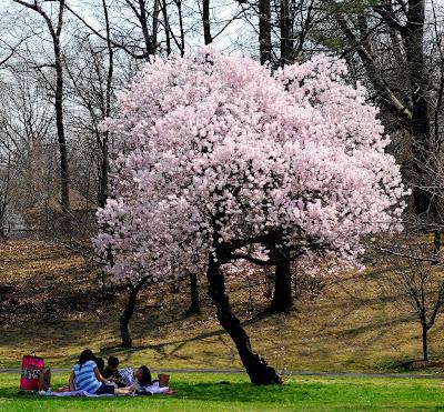room   view cherry blossoms branch brook park newark nj