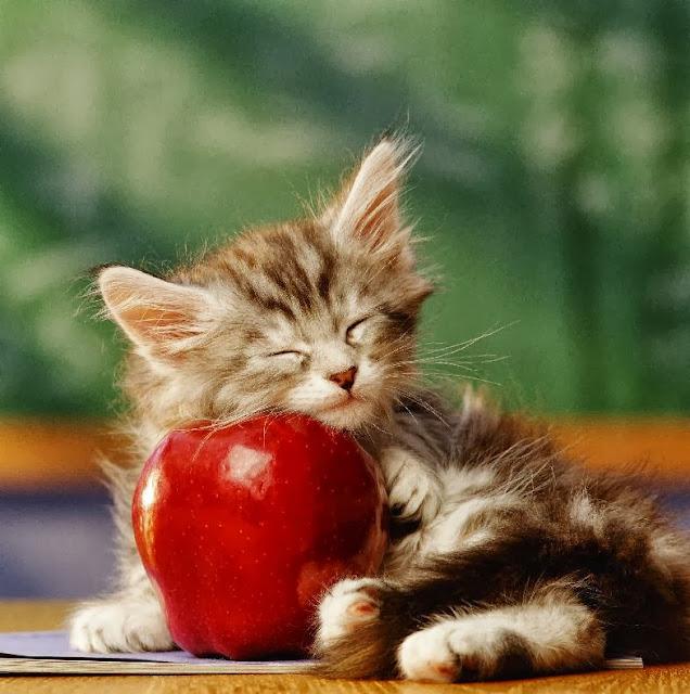спит на яблоке