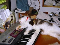 Cat using keyboard for pillow