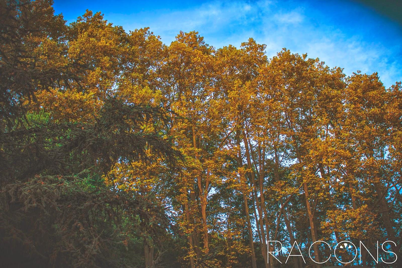 vista arbres tardor jardins de la devesa