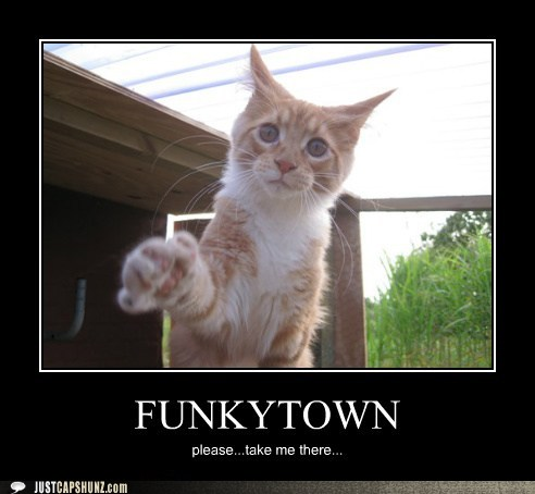 Funny Captions Funkytown