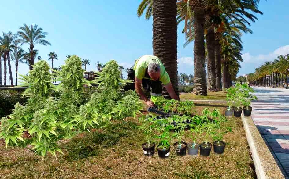Carrer del mar salou posa a punt la seva jardineria i - Jardineria la font ...