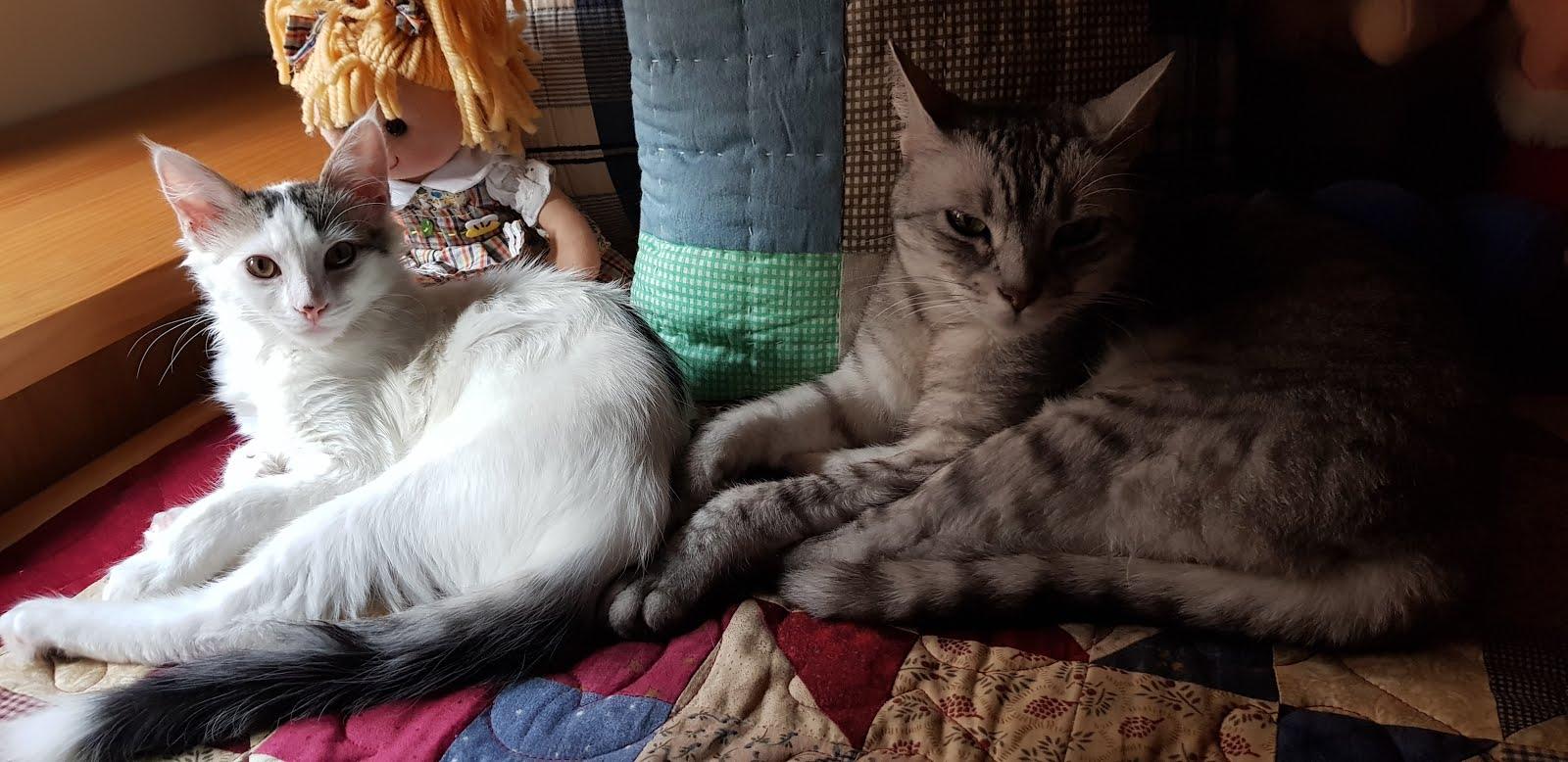 Kiara y Miska