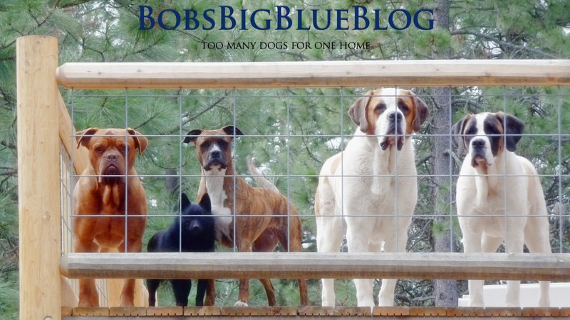 Bob's Big Blue Blog